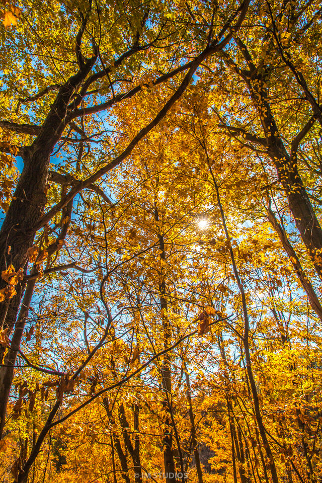Fall Photos 2015 (43 of 70).jpg