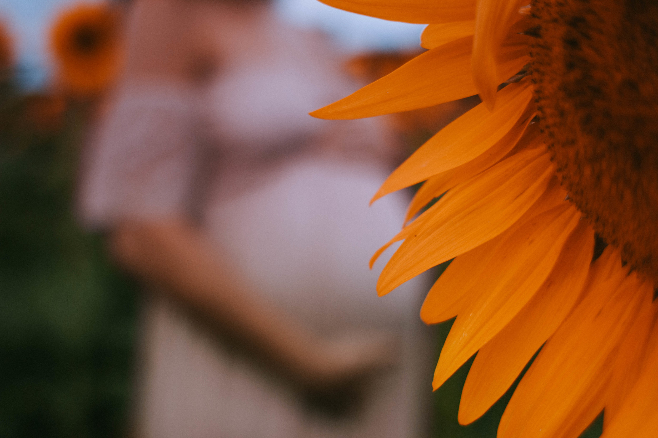 sunflower maternity session ithaca new york maternity photography