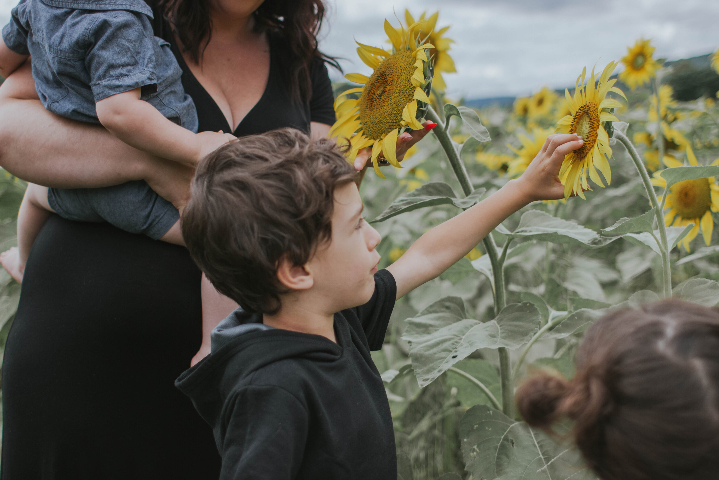 sunflowerlove-34.jpg
