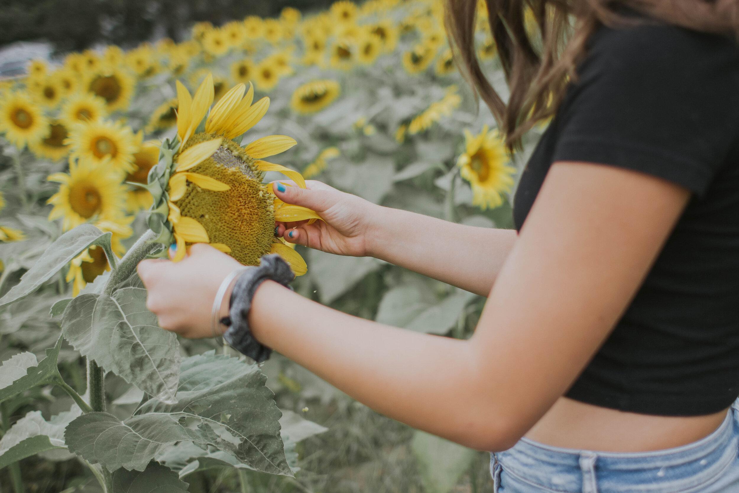 sunflowerlove-51.jpg
