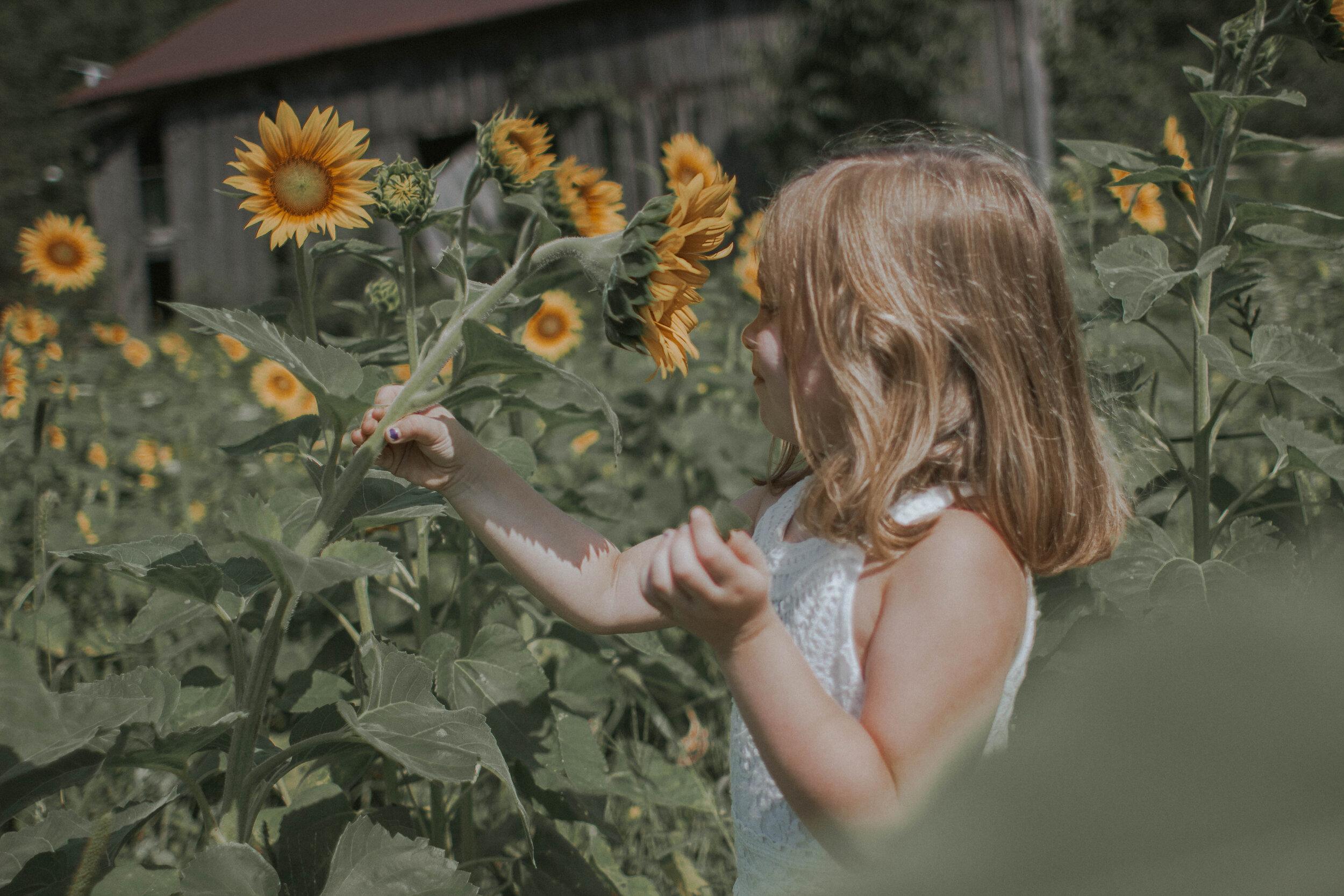 maggiemase_sunflowers_aug-20.jpg