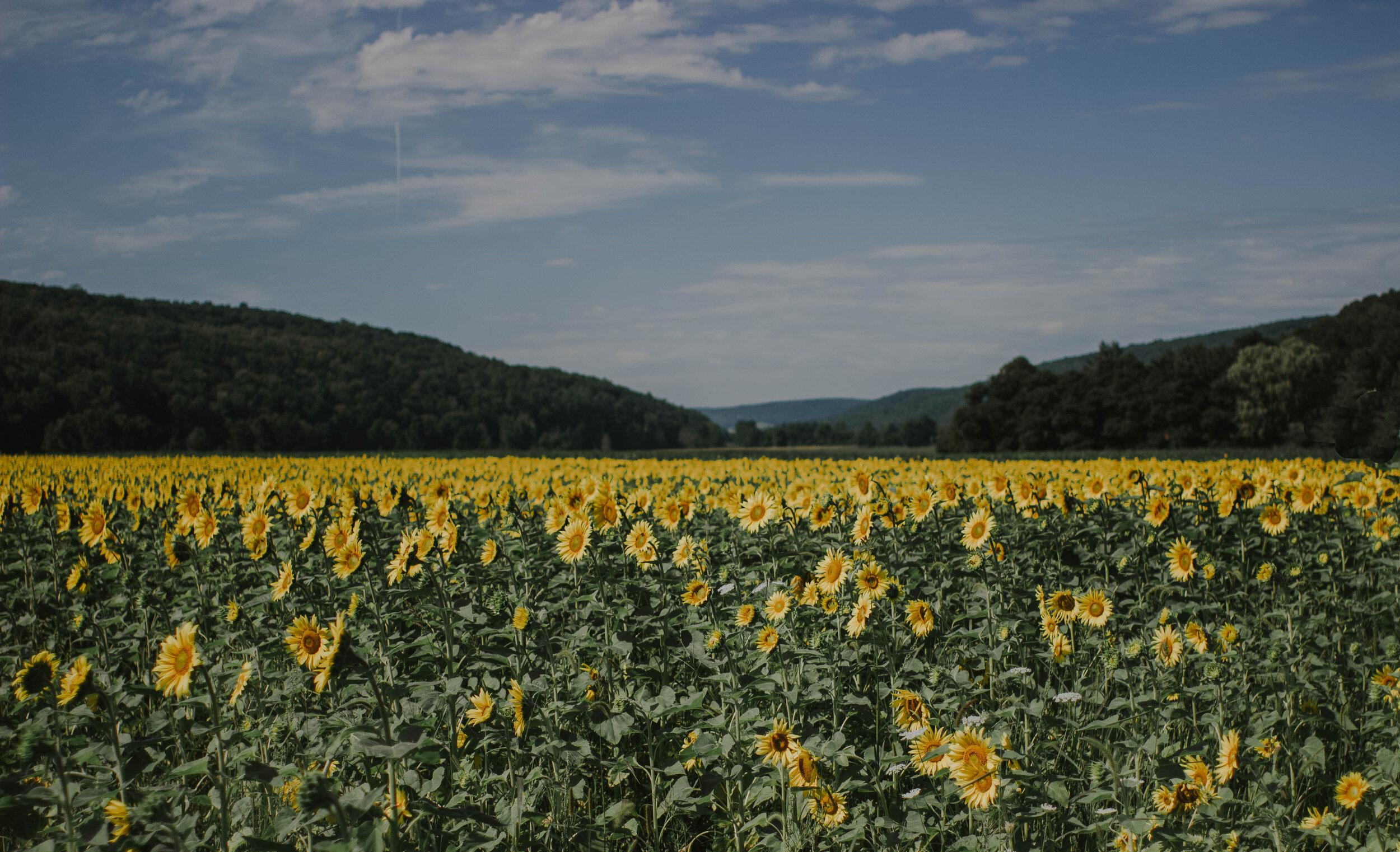 sunflowersmagsandmase-1.jpg