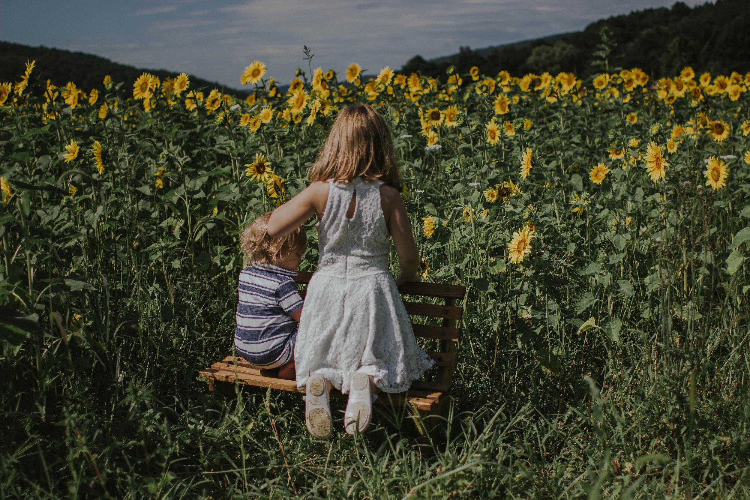 sunflowersmagsandmase-52.jpg