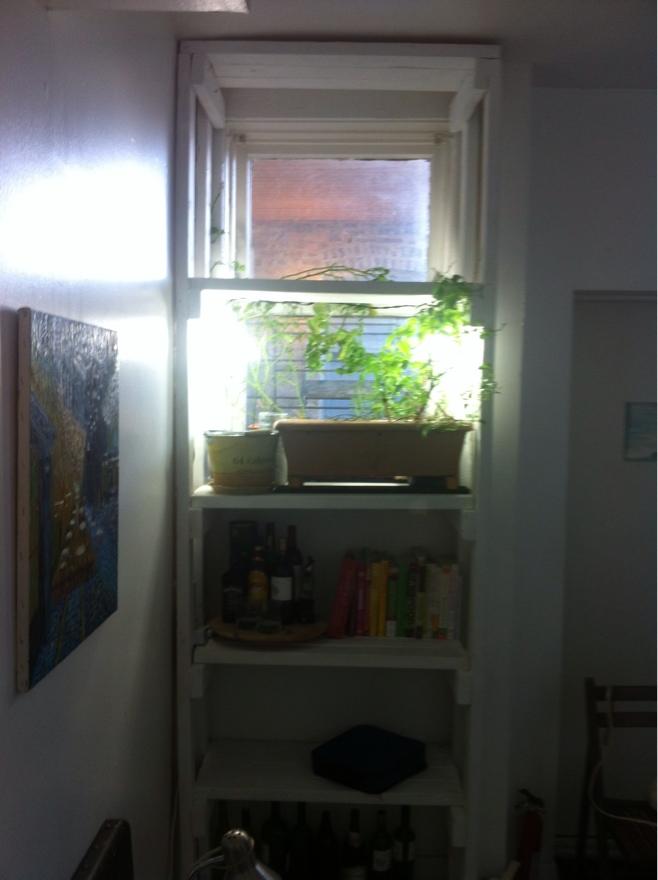 Shelf Finshed.jpg
