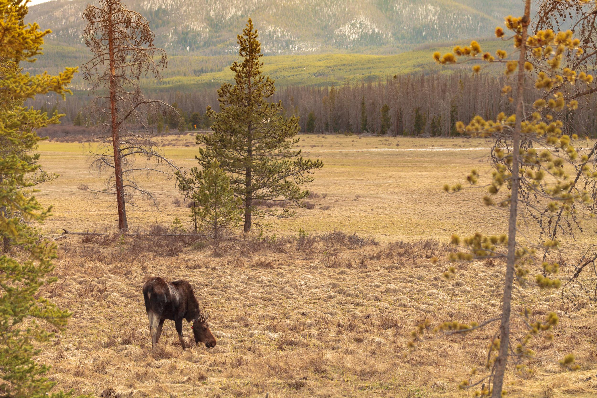 Colorado_day3-2501.jpg