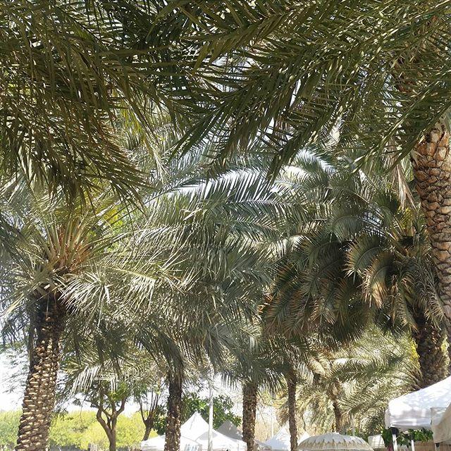 Market day under the #palms. Spending as much time as we can outdoors enjoying this perfect weather.  @ripefresh #zabeelpark #RipeMarket #weekend #sunshine #familytime #Dubai #mydubai #UAE #happydubai