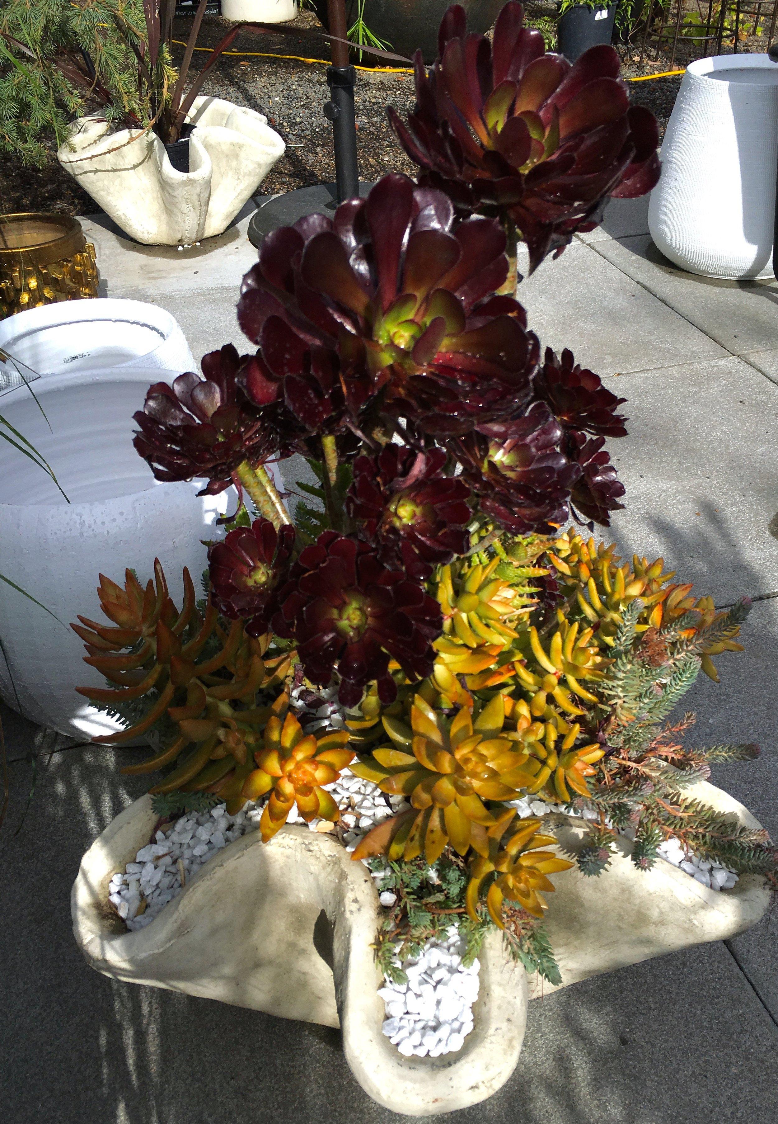 Copy of Succulent Planter