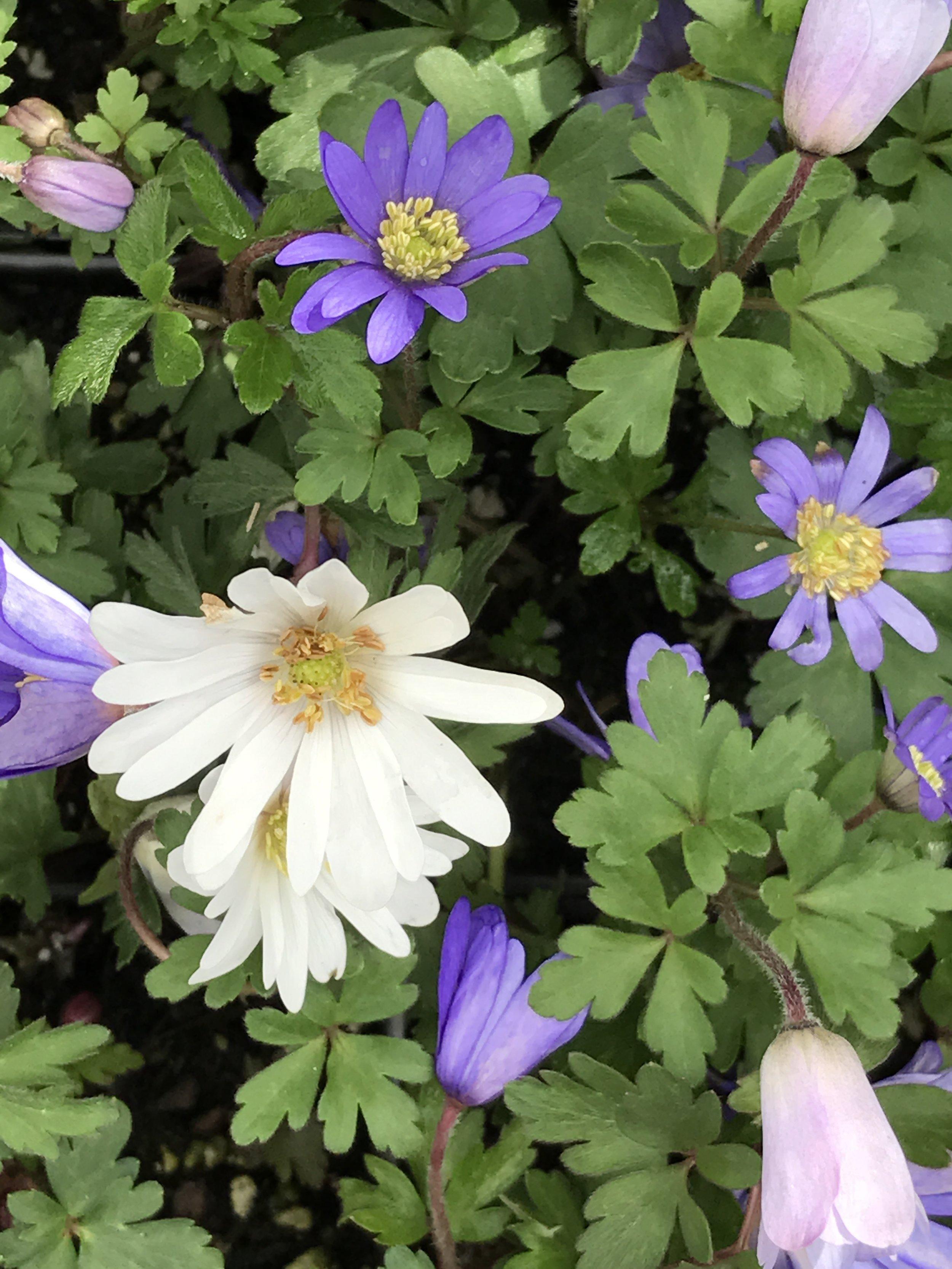 Annual & Perennial Flowers