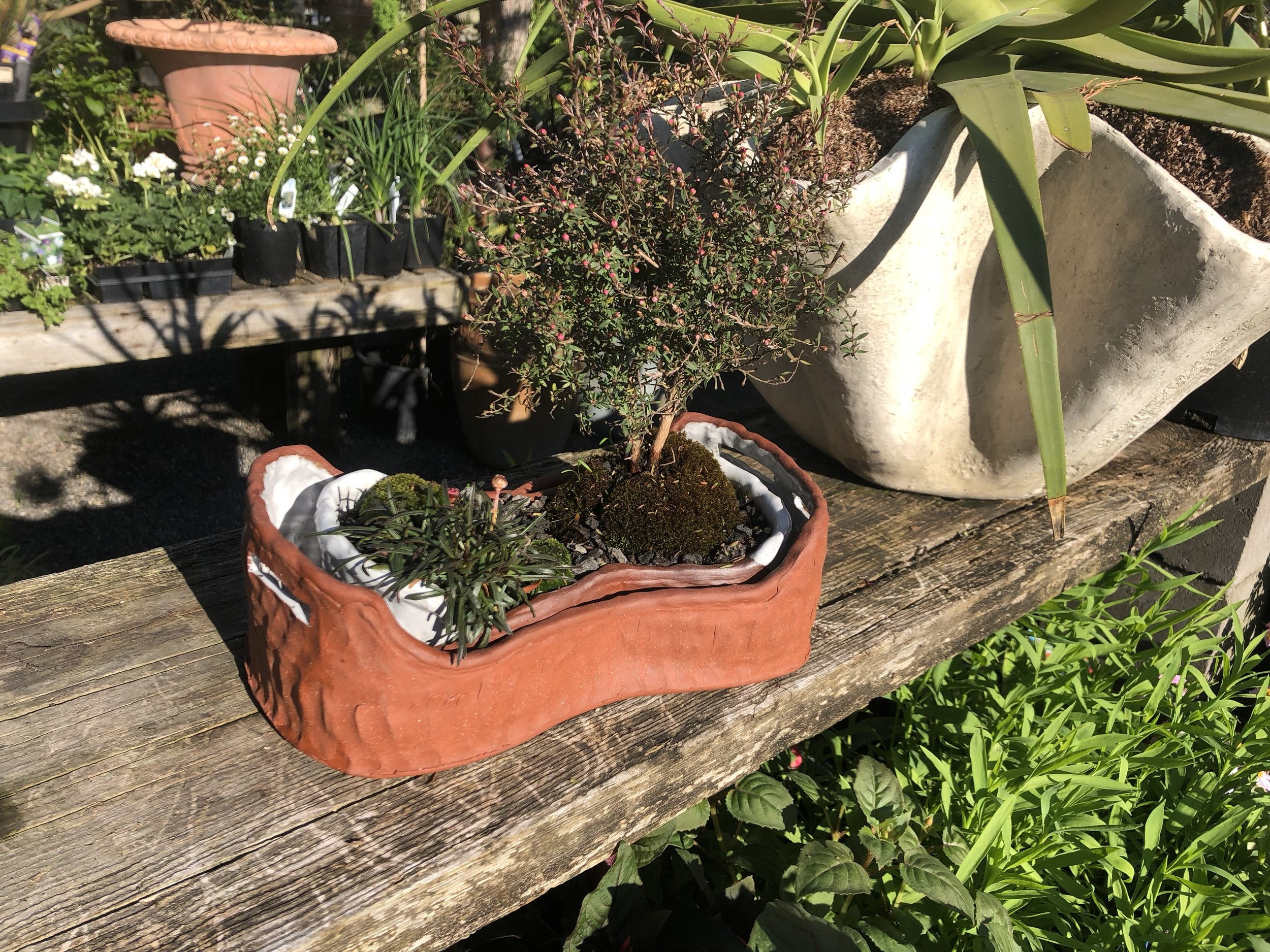 Paige Wright vessels are available for purchase, planted or unplanted at the nursery.