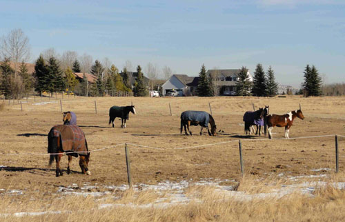Figure 8-2. Horse pasture at a riding stable in the Elbow valley, surrounded by houses.