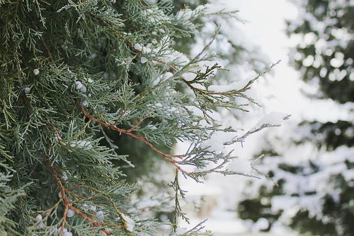 Winter in Arvada Colorado
