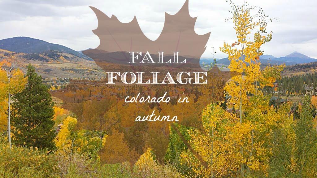 Fall Foliage in Colorado