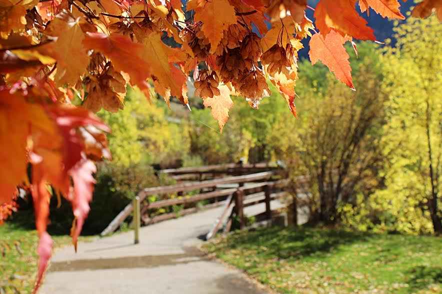 fall pic.jpg