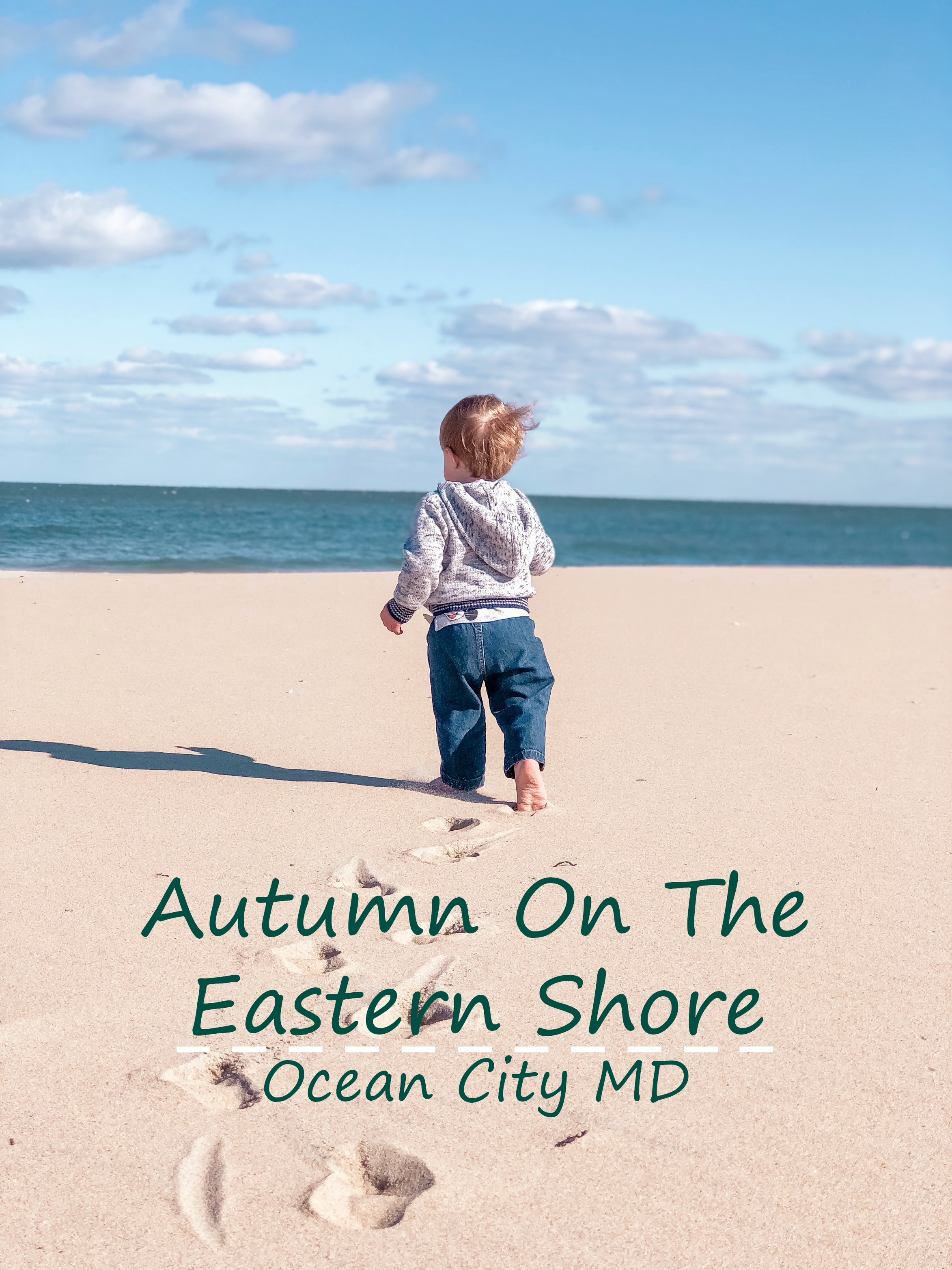 autumn on the eastern shore.jpg