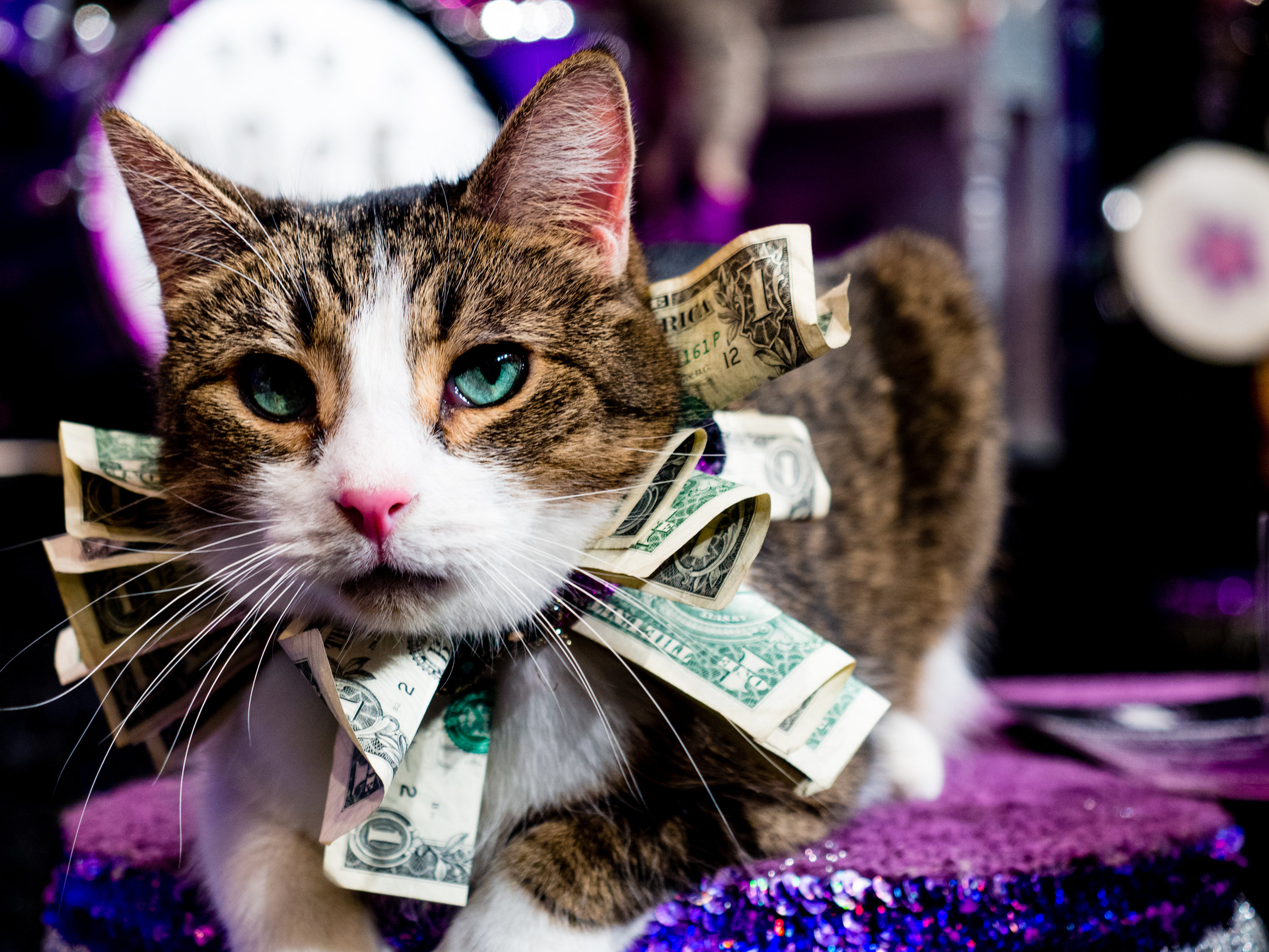 Acro-Cats.jpg