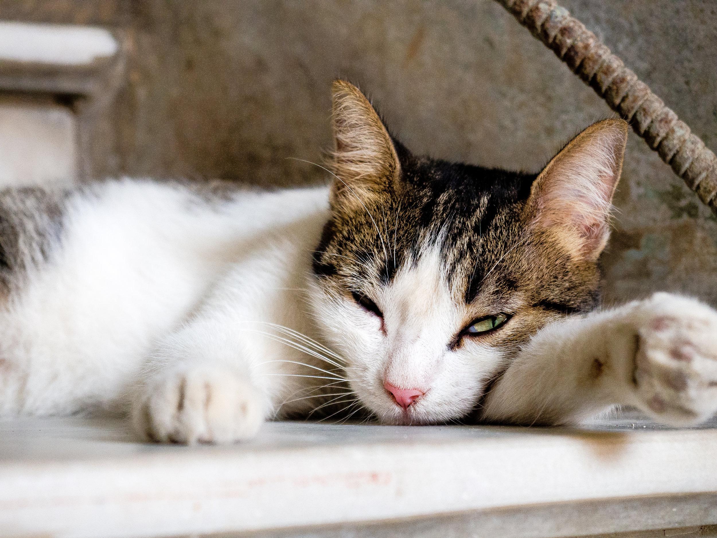 Cuba sick cat.jpg