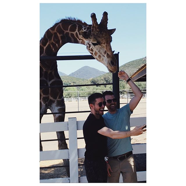 The Making of a Selfie: Behind the Scenes vs. Reality vs. Reaction #tbt #selfie #imstagram #behindthescenes #reality #malibuwinesafari #malibu #california #stanley #malibuwine #giraffe #🦒