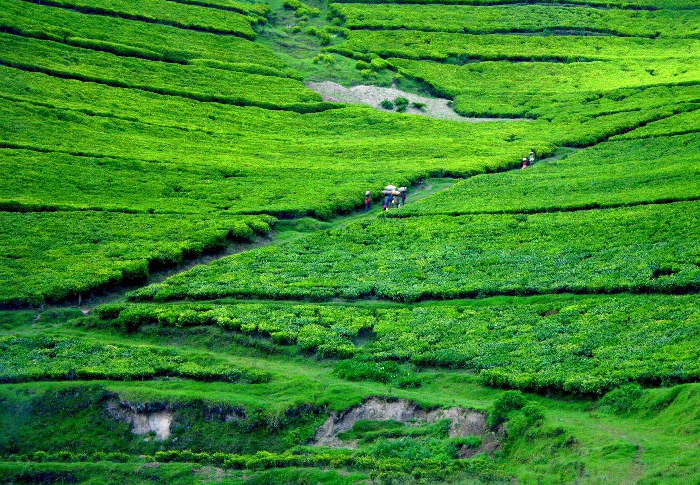 Picture 1 - Rwanda.JPG