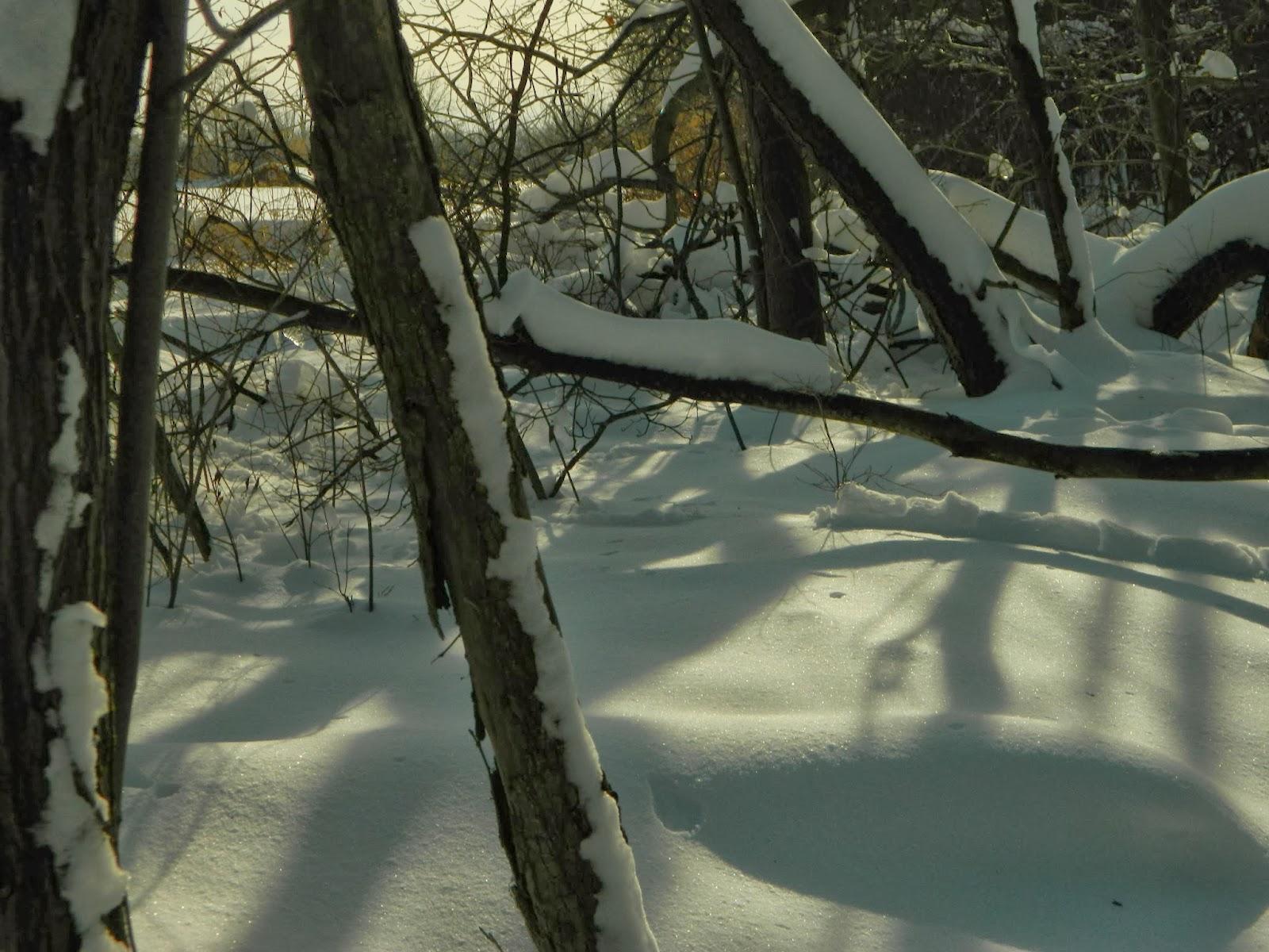 afc12-winter