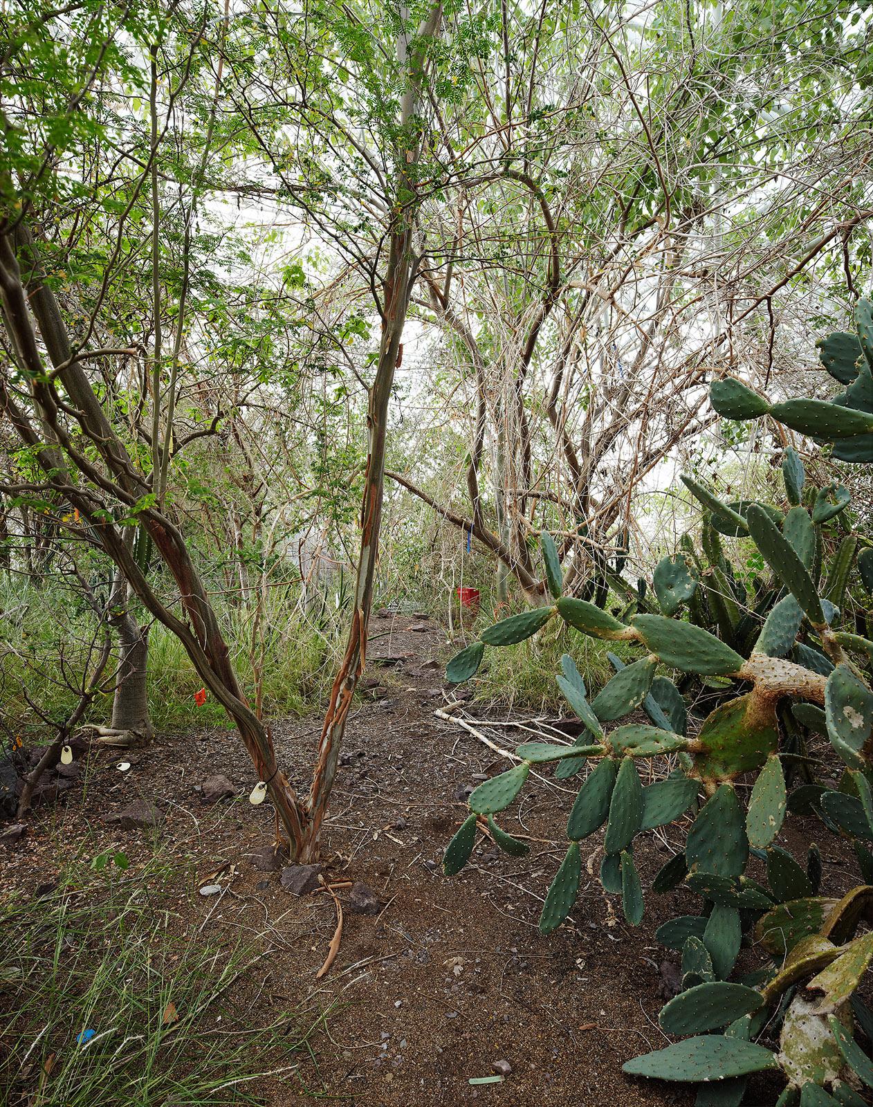 08_949e142d2d232351-cactus_2.jpg