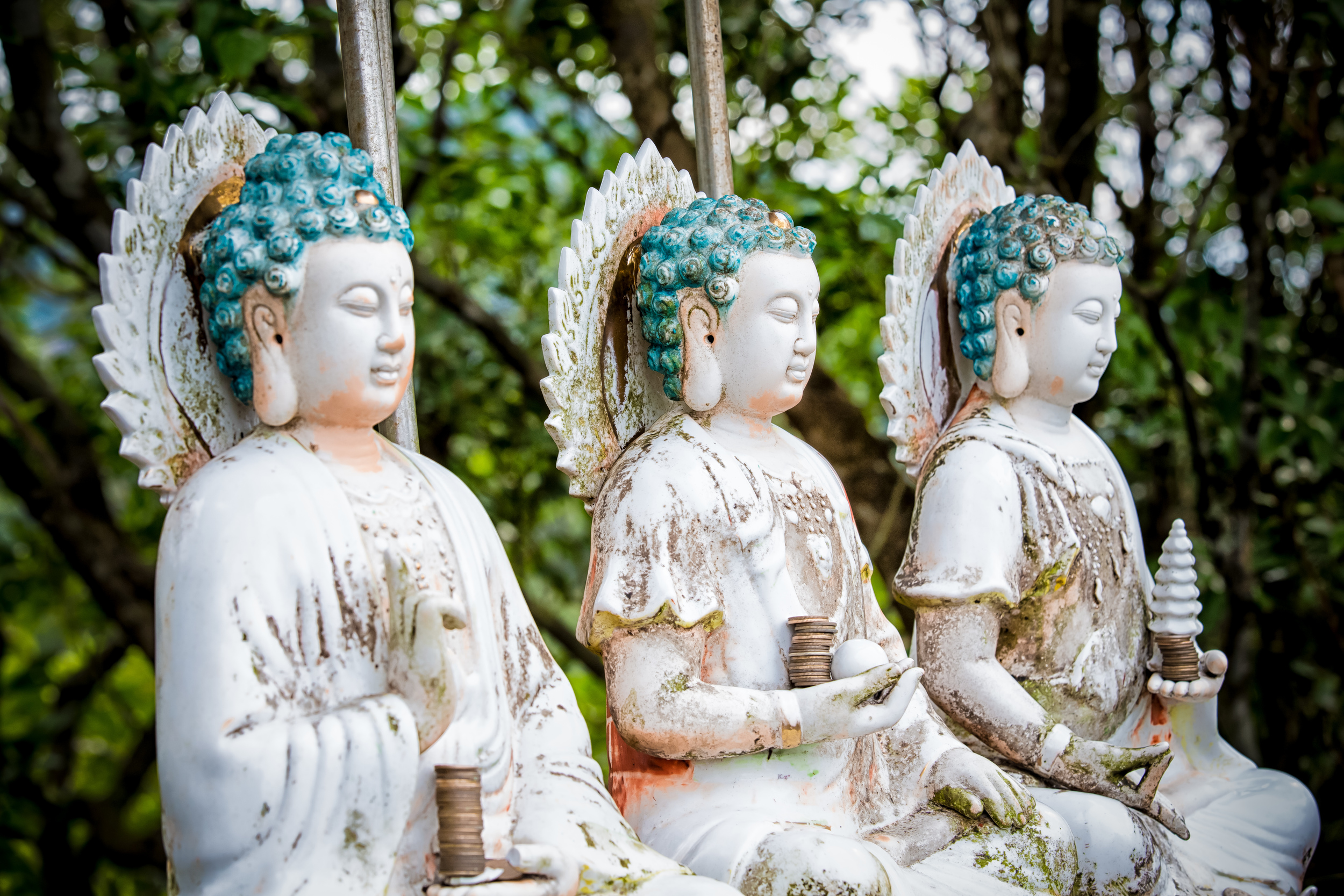 - Buddha Statues at the top of Putuo Mountain (普陀山)