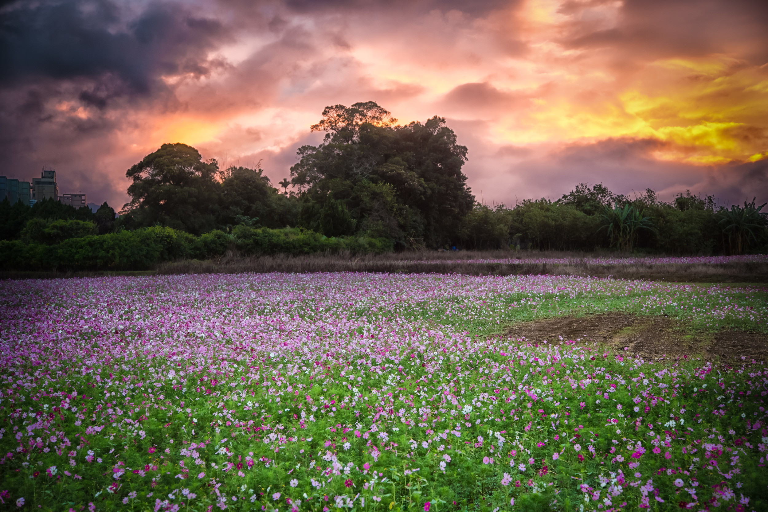 - A field of flowers near the resting place of Chiang Kai Shek