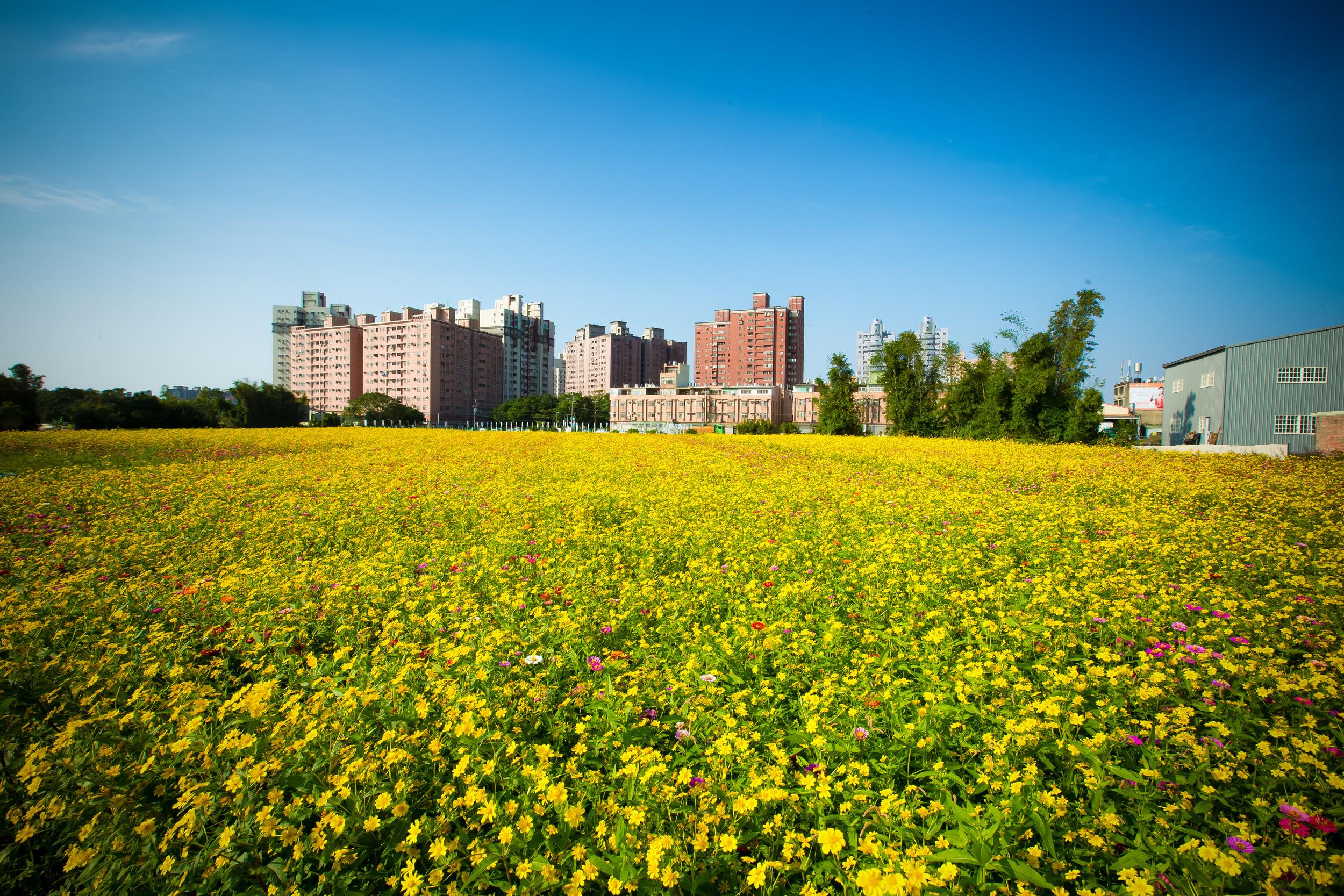 - A field of flowers near my home.
