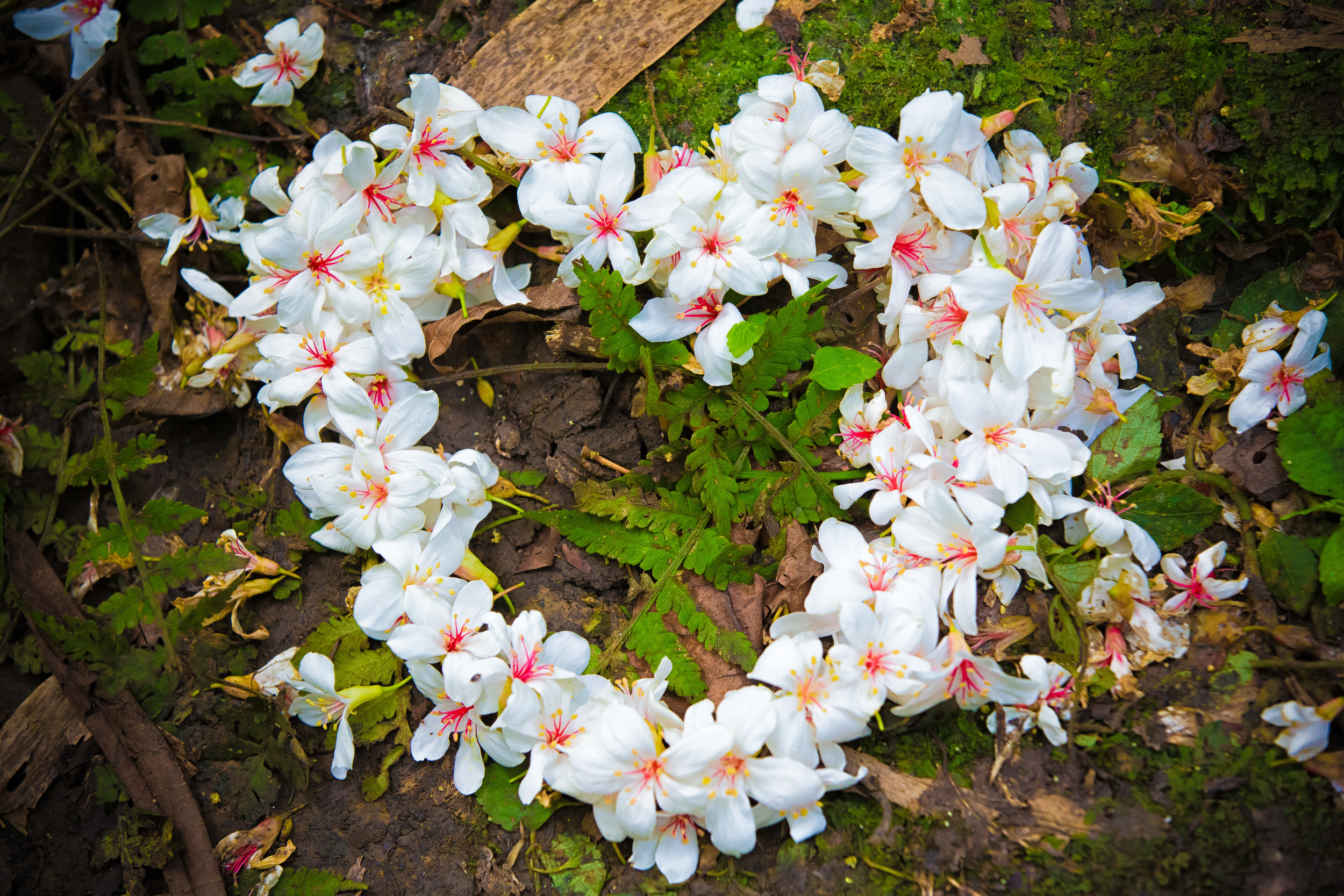 Cute! Tung Blossoms arranged in the shape of a heart.