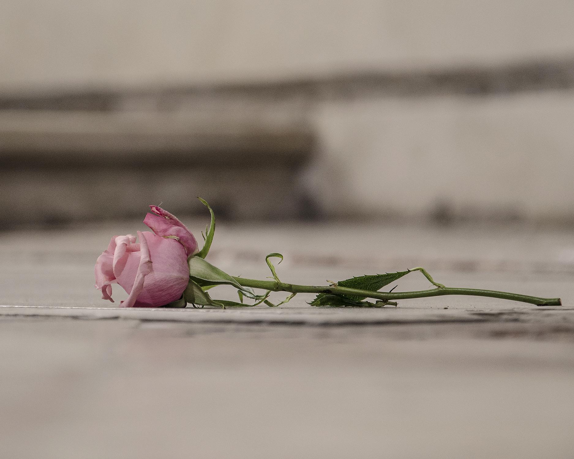 rosa a ricordo-7922.jpg
