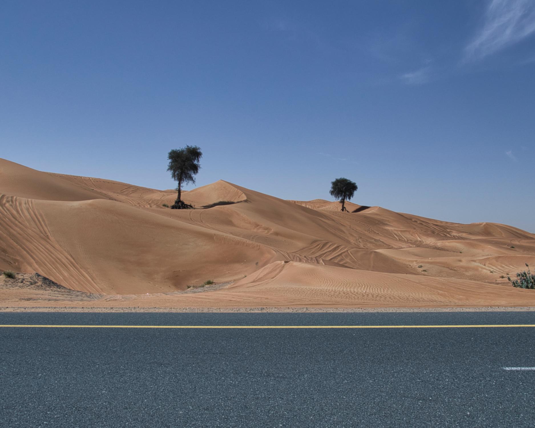 deserto dubai-alberi-0987.jpeg