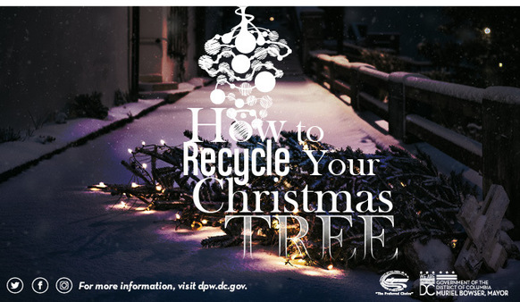 2017.12-Xmas-tree-recycling.jpg