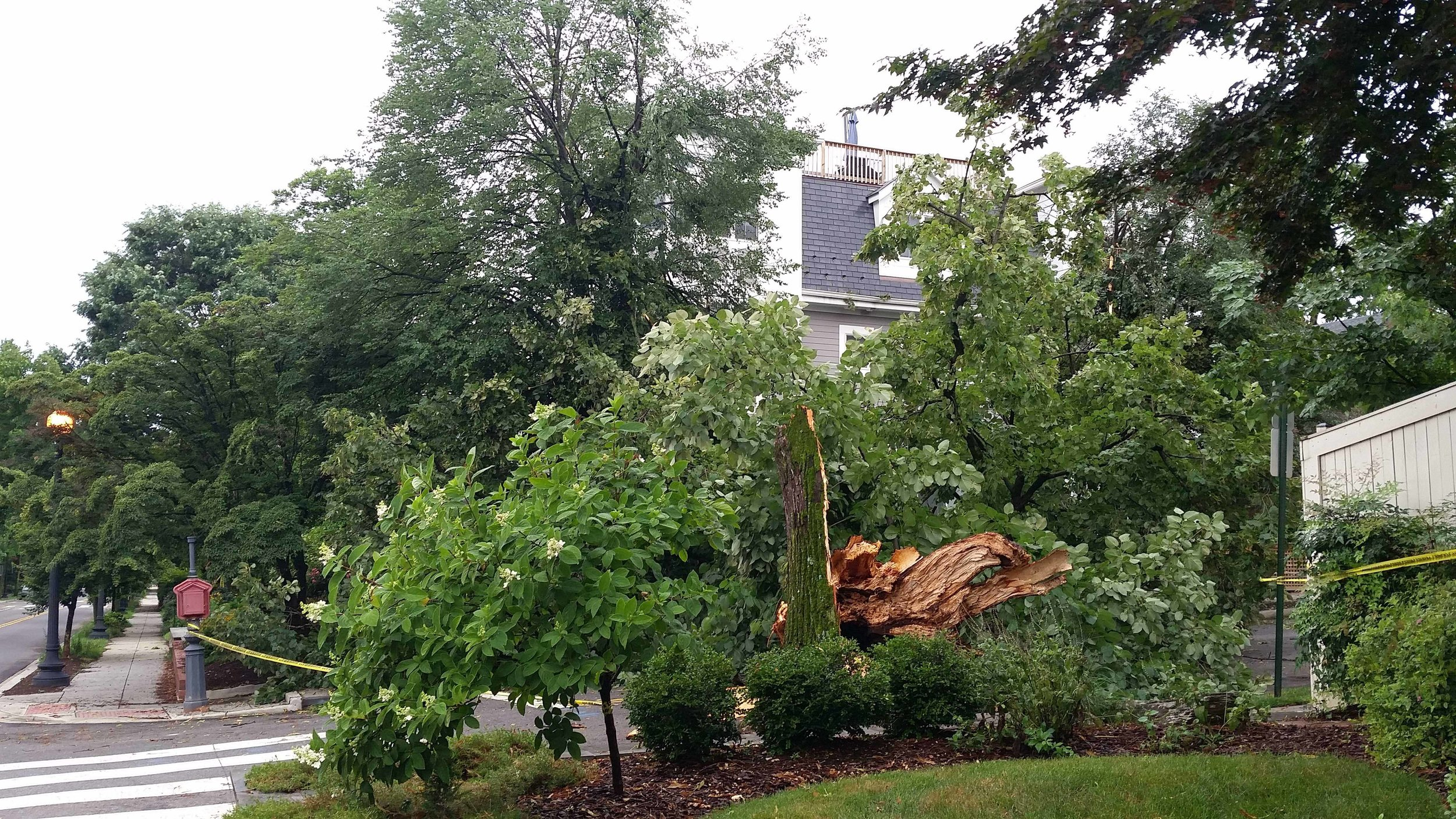 A storm on July 6 knocked down a tree on the corner of 37th and T, which broke a window and partially destroyed a fence at the house across the street.