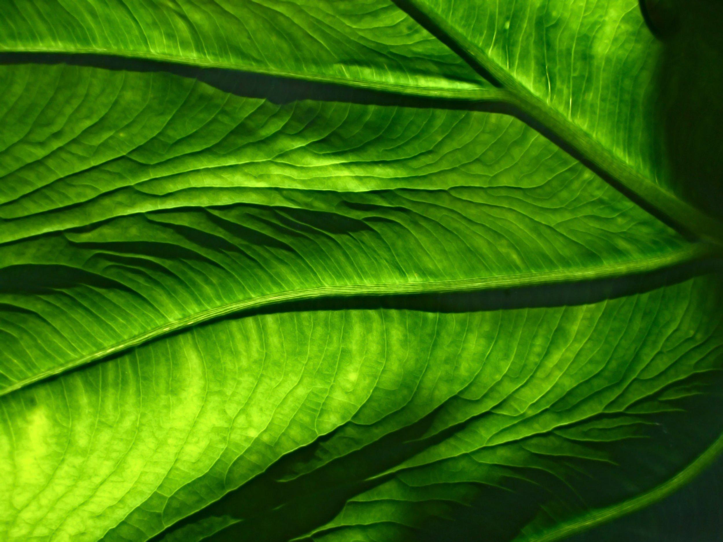 A bit like a mammogram, but greener. Pic by  Joe Wroten .