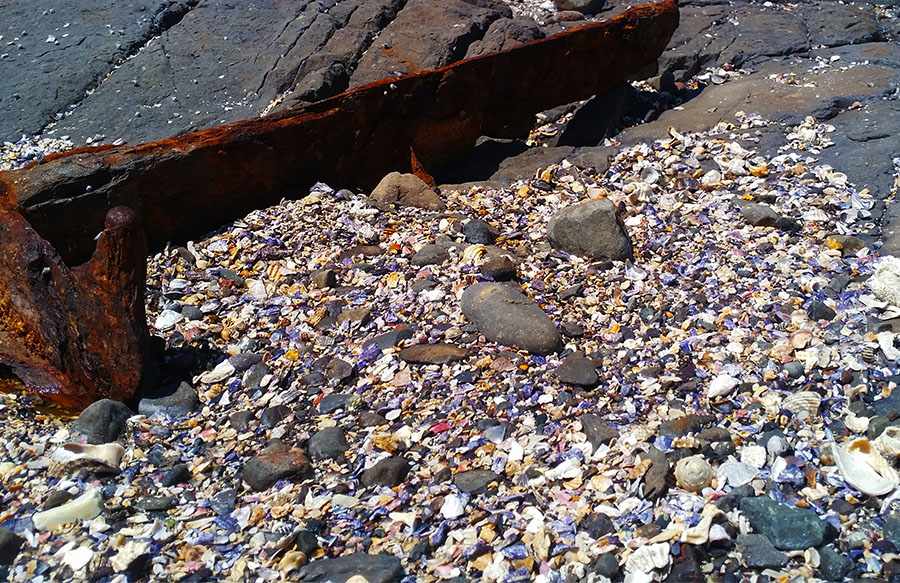 Shells on top of the midden with shipwreck skeleton. Photo © Claudia Jocher 2017
