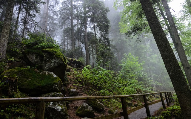 Black Forest walk. Photo by  Marvball .