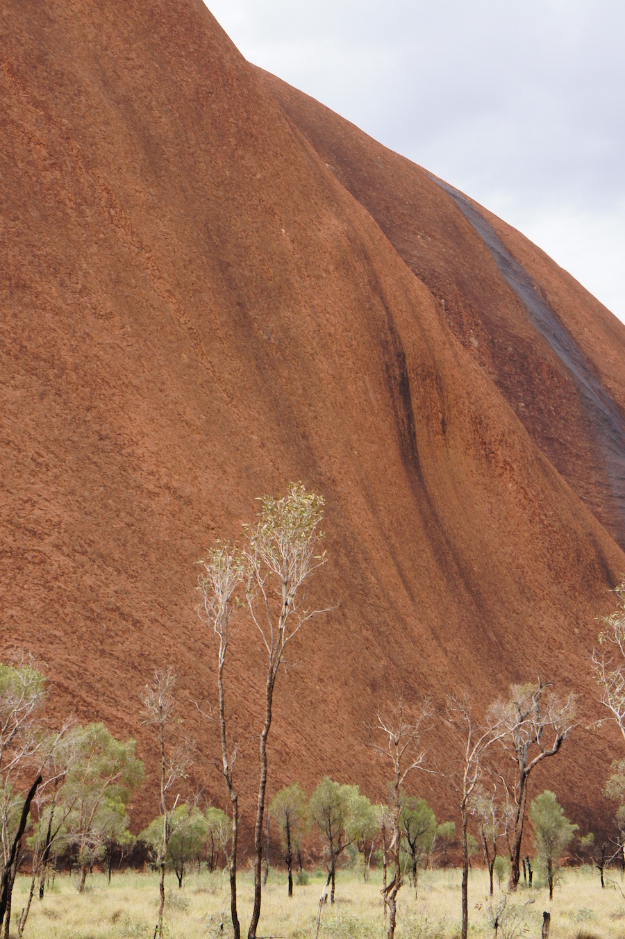 A rock which speaks: Uluru near the Liru (Poisonous snake man) walk. Photo © author 2017.