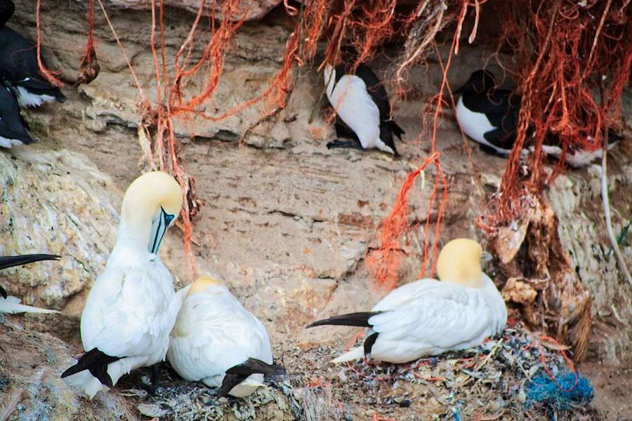 Seabirds in their plastic houses. Photo by  Tyros.andi