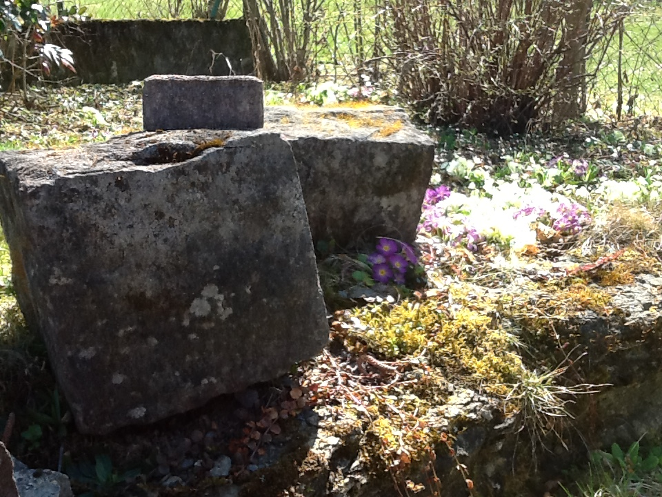 Old millstones surrounded by flowers near the denuded hedge in the yard.