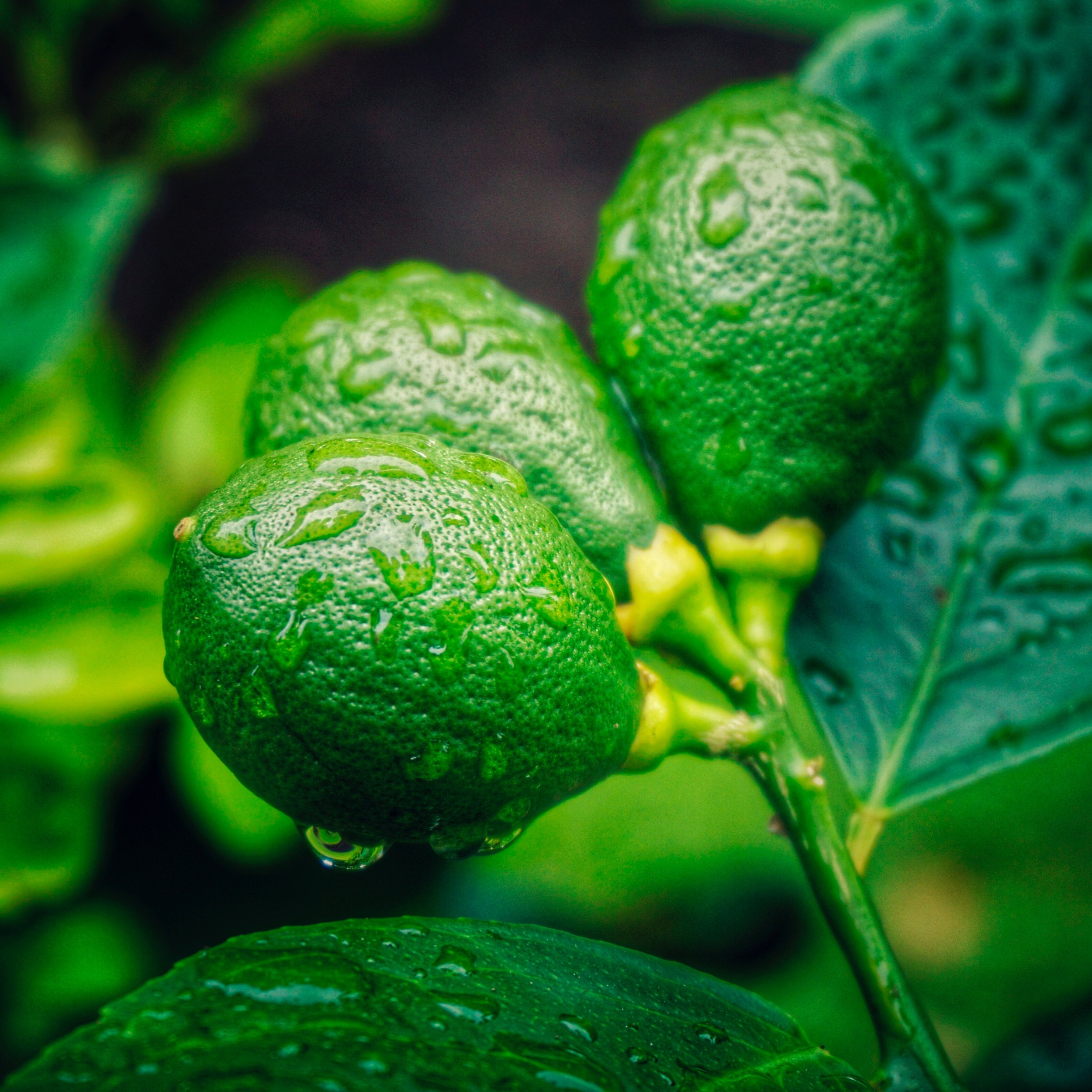 Teardrop-shaped green blobs. Photo by  Dawn Armfield .