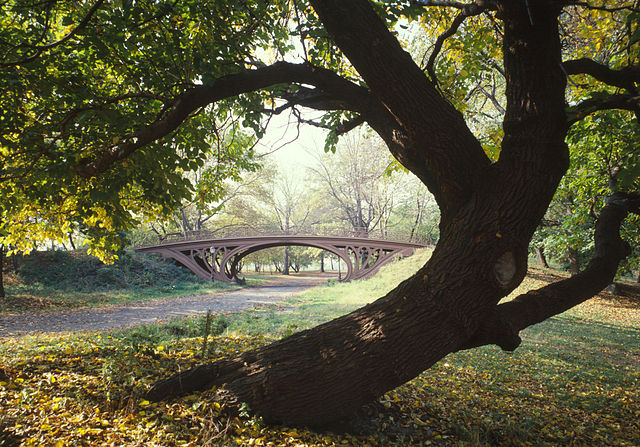 Gnarled tree framing a bridge in New York's Central Park. Photograph by  Jet Lowe .