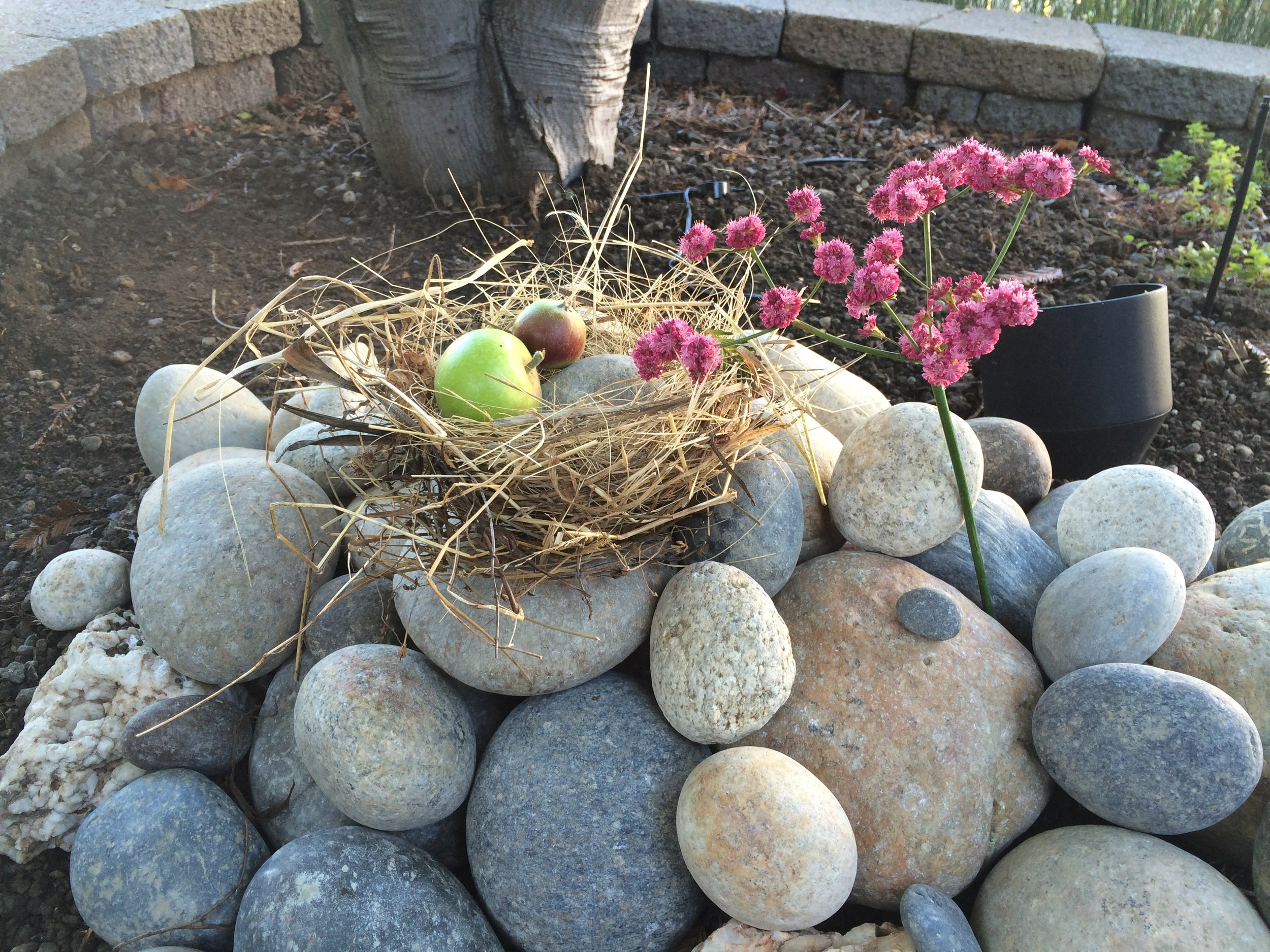 Cookie's Backyard Memorial