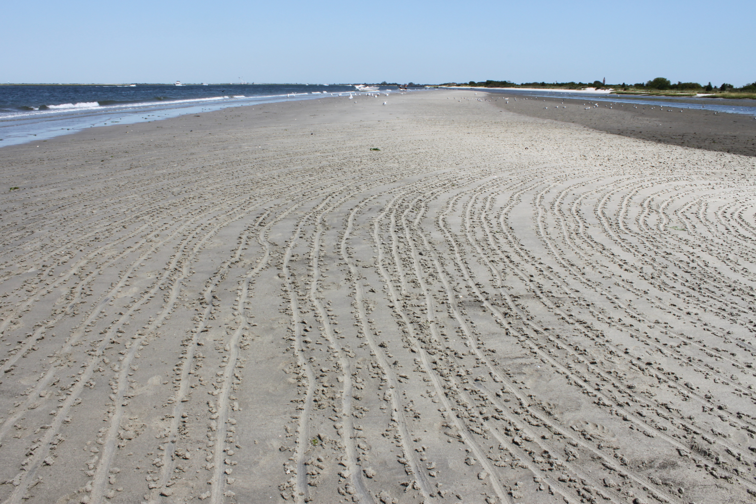 """Photo documentation of """"Contour Drawing of a Clam Shell"""" , Wantagh NY"""
