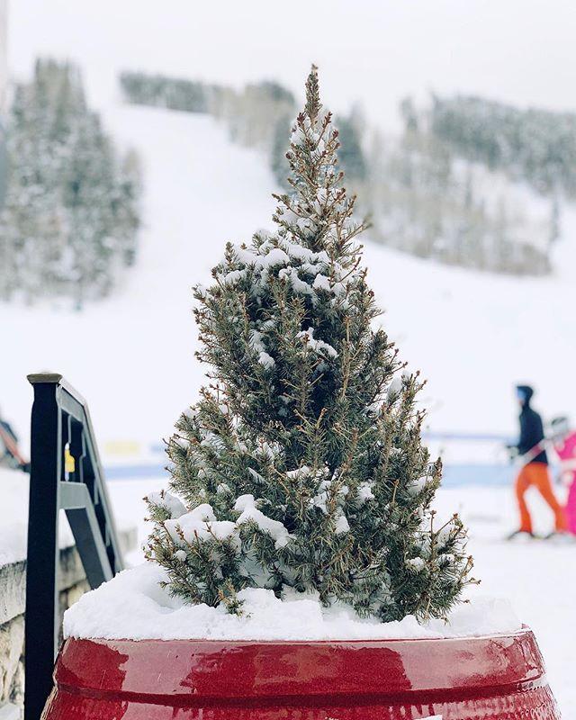 Arbolito. . . . . . #snow #winter #tree #pine #ski #wintersports #colorado #beavercreek