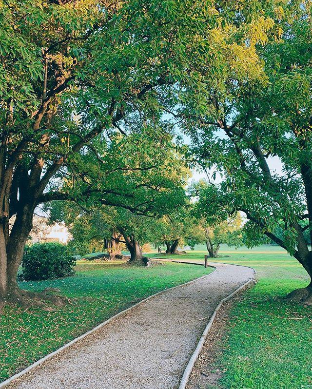Por un tiempo no puedo correr pero por suerte puedo caminar. . . . . . #nature #trees #green #path #walk