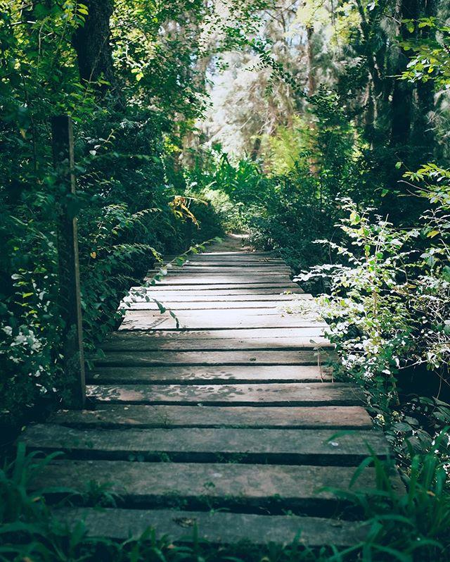 El camino. . . . . . #green #nature #deltatigre #path #summer