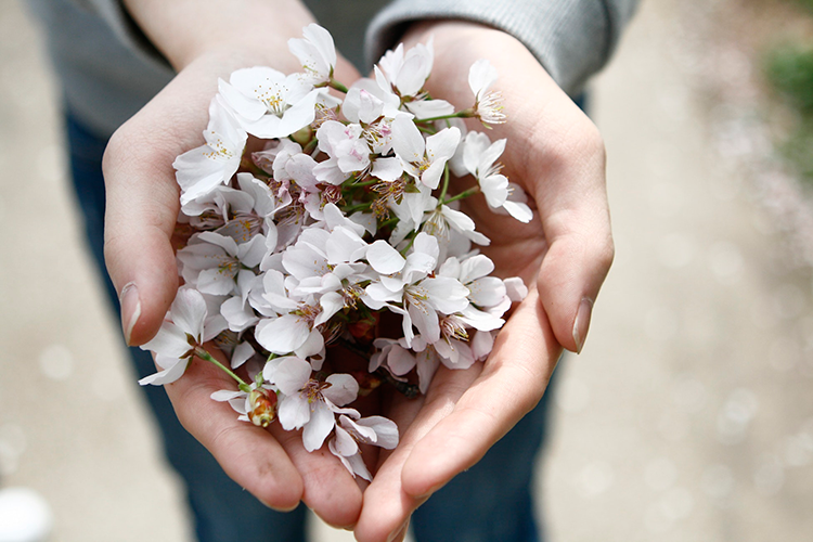 Blog-Post-Hands-holding-flowers-web.png