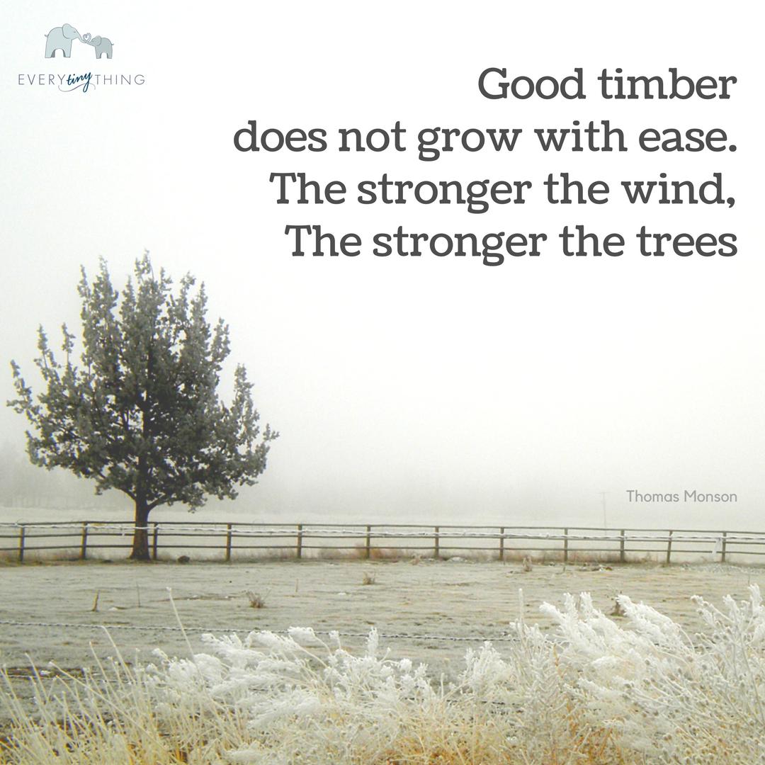 good timber.png
