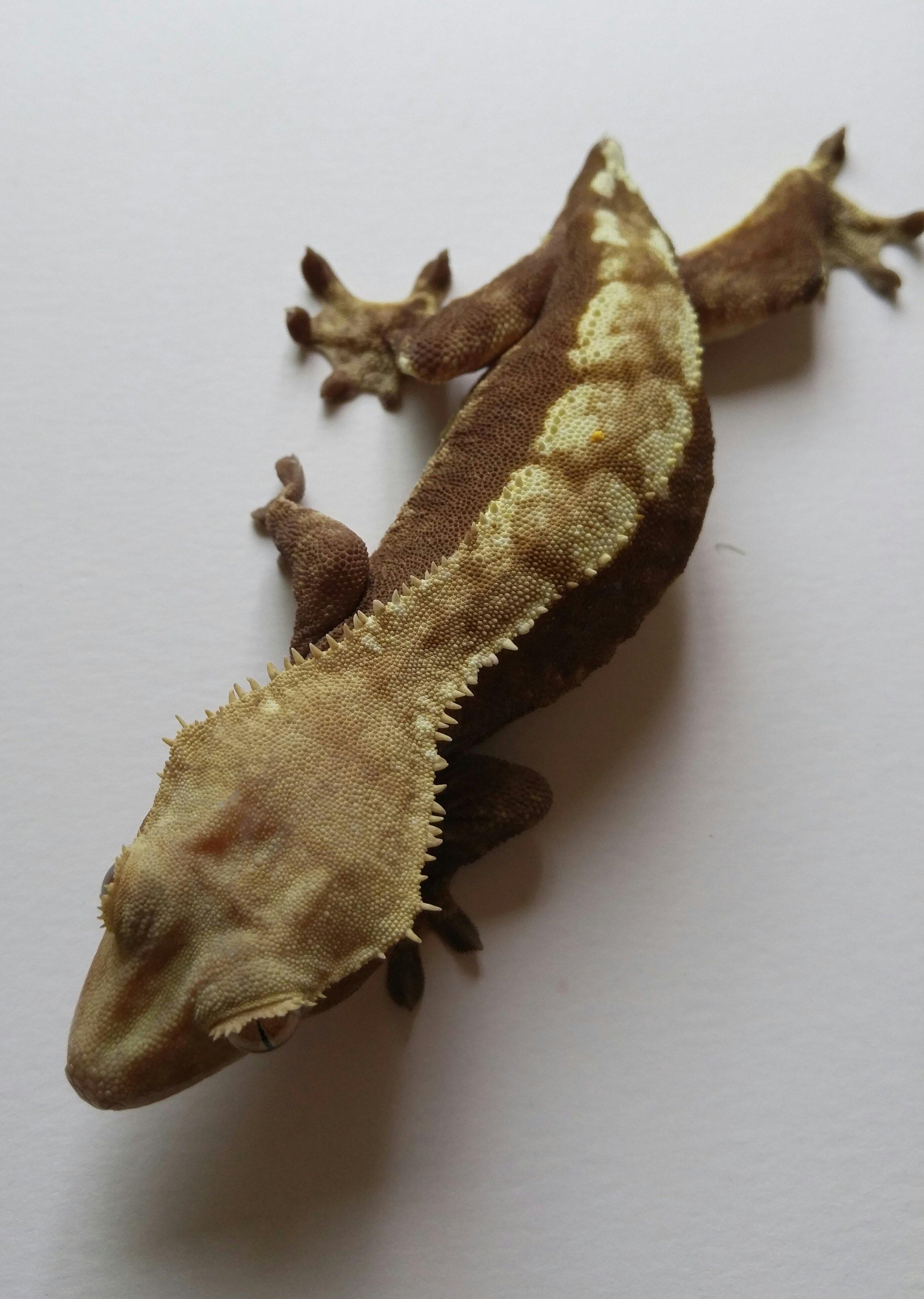 Female 10c