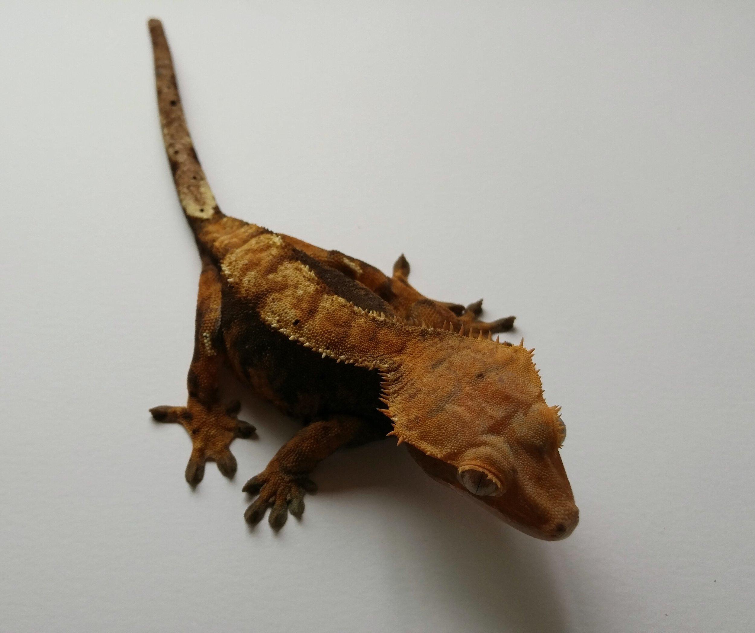 Female 12C