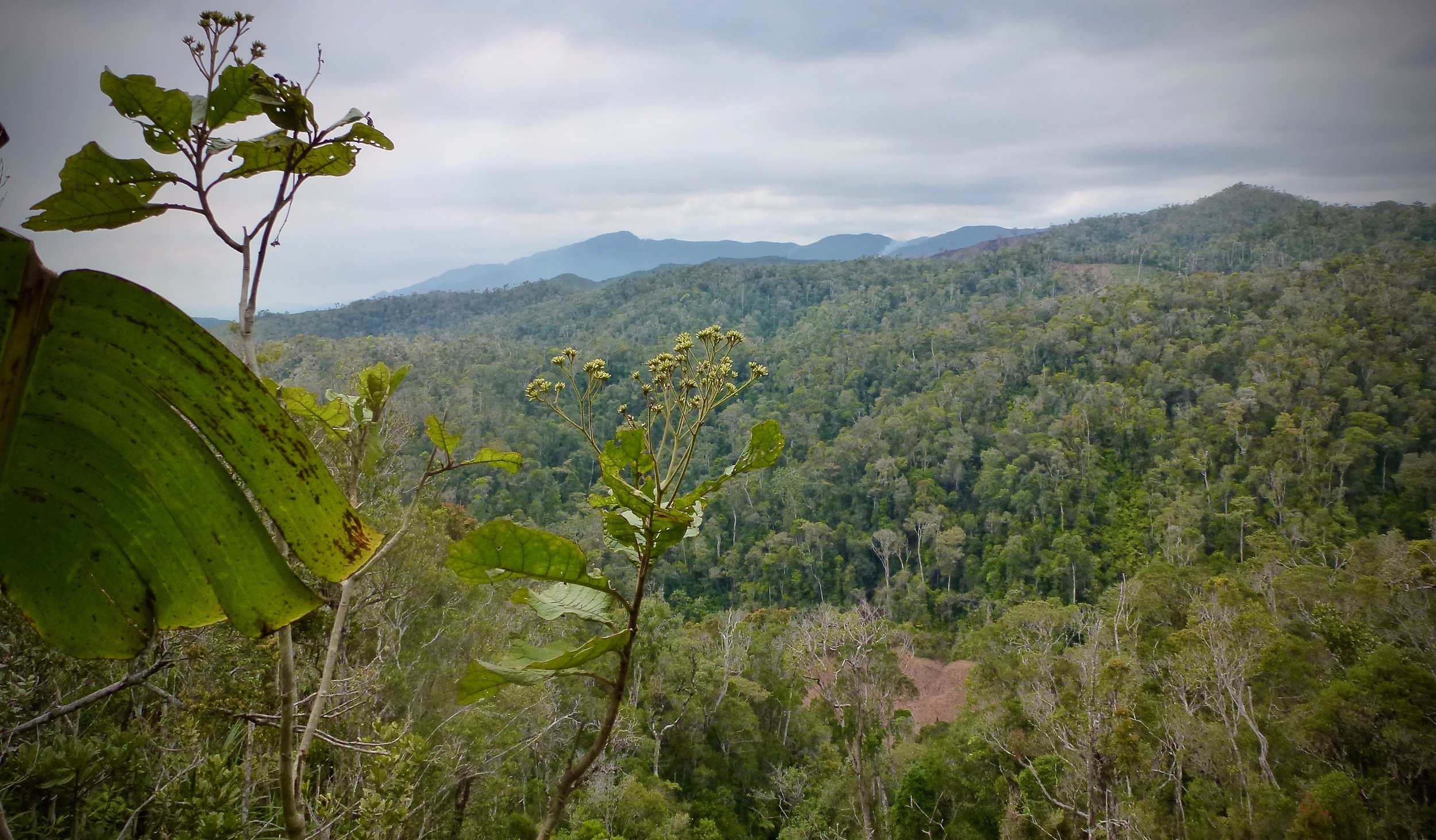Vohimana Reserve.